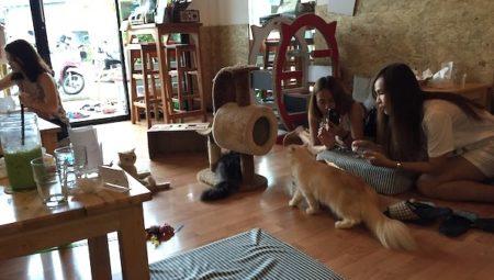 【チェンマイの猫カフェ】かわいい猫と一緒に過ごす癒しの空間