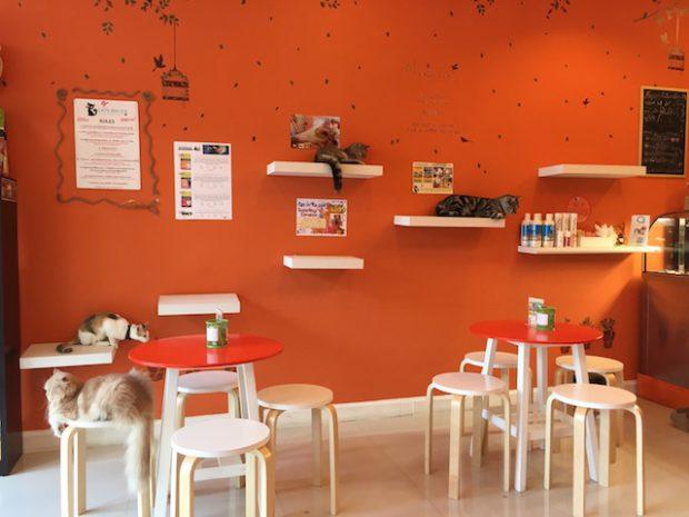 【チェンマイの猫カフェ】かわいい猫と一緒にすごす癒しの空間