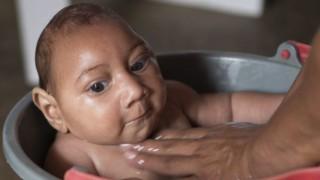 世界保健機構は最新の報告でジカウイルスは非常事態であると伝えた【タイサイト訳】