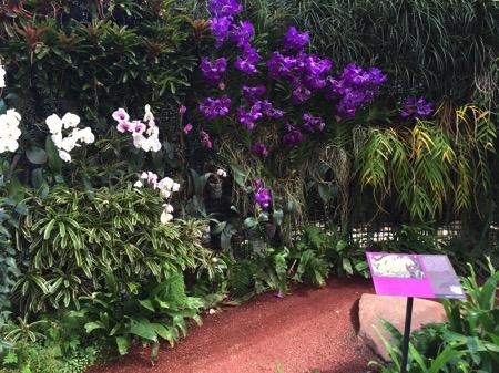 チェンマイ県クイーンシキリットボタニックガーデンの蘭の花 2