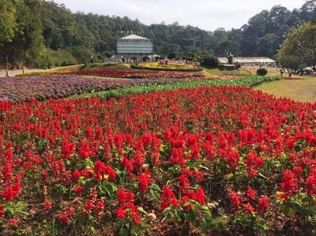 チェンマイにあるクイーンシキリットボタニックガーデンの花