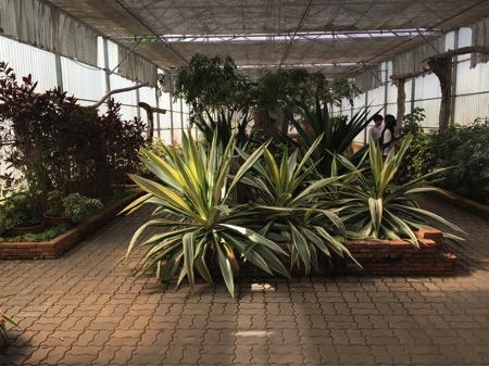 チェンマイ県クイーンシキリットボタニックガーデンの温室プラント 1