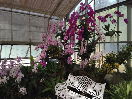 チェンマイ県クイーンシキリットボタニックガーデンの蘭の花 1