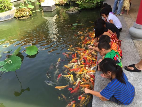 ウドンタニタイ中国文化センターの鯉