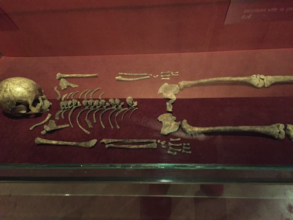 バーンチエン国立博物で展示されている発掘された骨 1