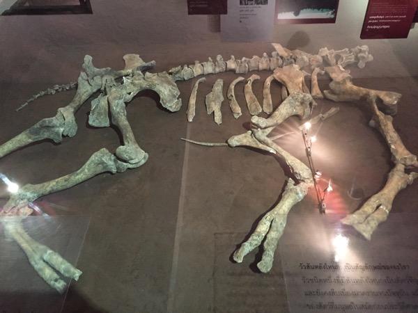 バーンチエン国立博物で展示されている発掘された骨 2