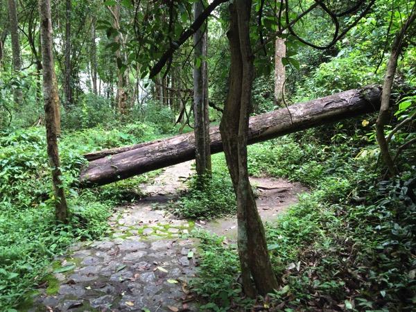 ポーンドゥアット森林公園の遊歩道 7