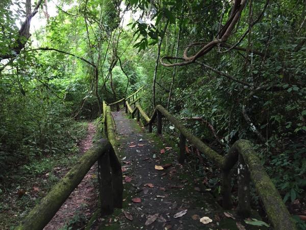ポーンドゥアット森林公園の遊歩道 10