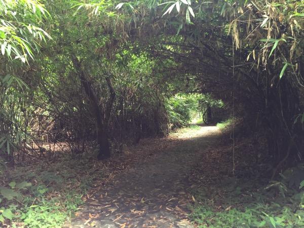 ポーンドゥアット森林公園の遊歩道 8