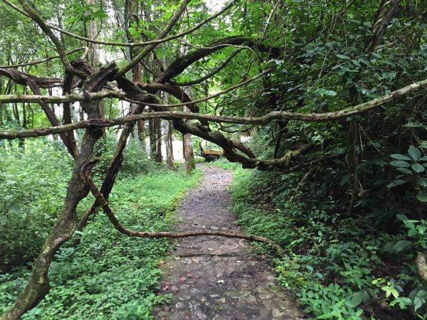 ポーンドゥアット森林公園の遊歩道 9