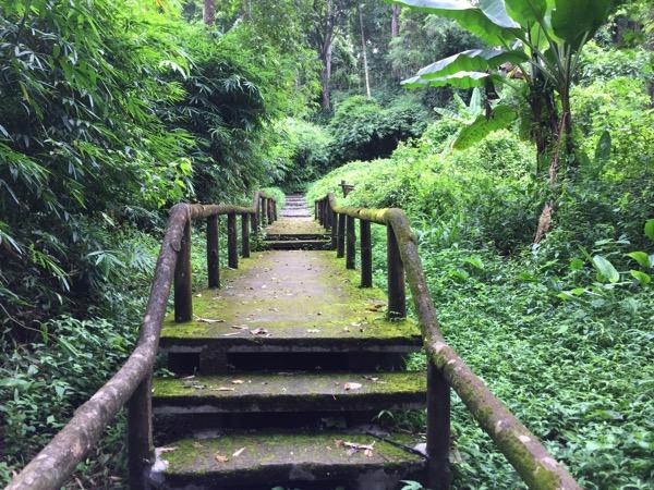 ポーンドゥアット森林公園の遊歩道 5