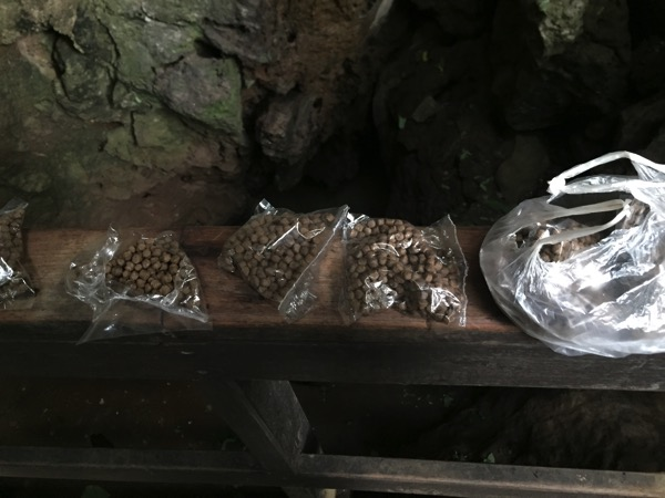 メーホンソンタムプラー国立公園の洞窟の魚にあげる餌