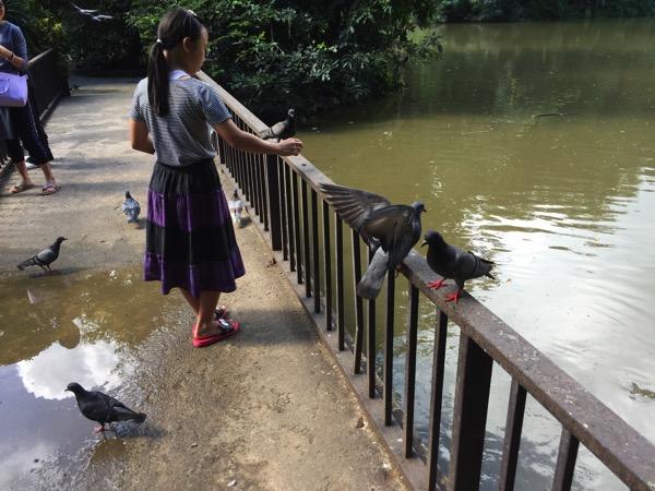 ワットウモーンの鳩に餌をあげるタイ人
