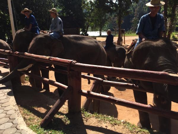 ラムパーン県象保護センターの象-1