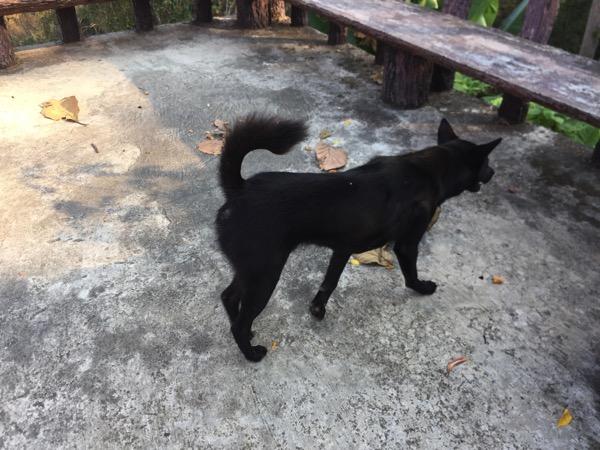 クンターン山のガイド犬