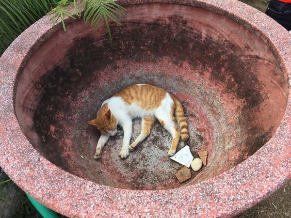 ジェーディーサオラン寺院の瓶の中にいる猫 title=