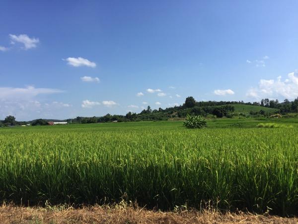 チェンマイののどかな田園風景