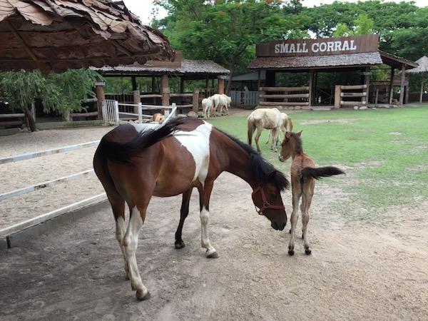チェンマイで乗馬と餌やり体験!動物たちとのふれあいを楽しめる牧場