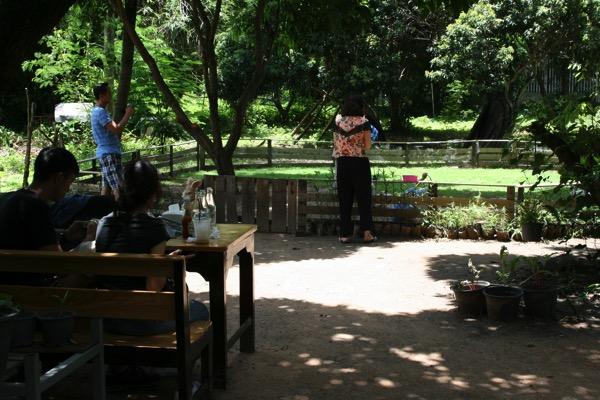 うさぎカフェの芝生ゾーン