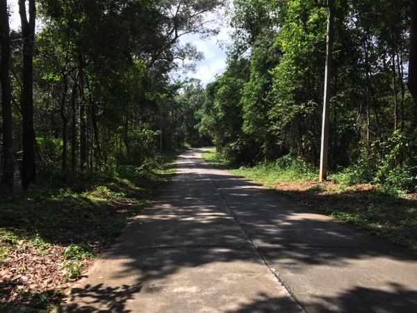 森の中のアスファルト道路