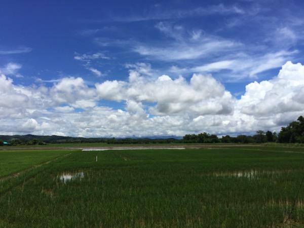 チェンライののどかな田舎風景 1