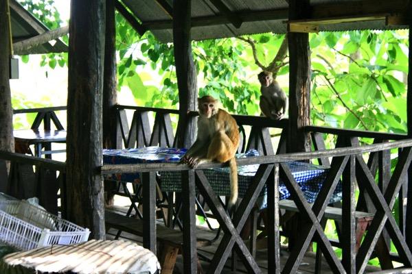 ムアンオン洞窟の猿