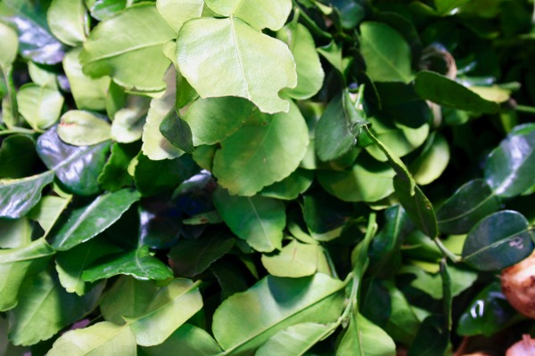 コブミカンの葉