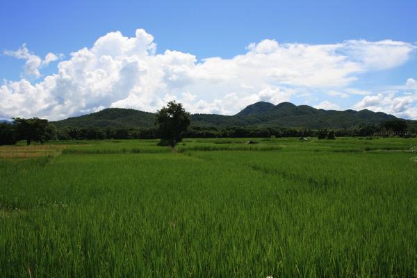 ナーン県からフアイゴーンへの道中の景色 1