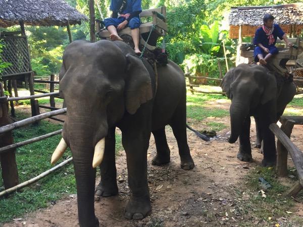チェンダオ象訓練センター