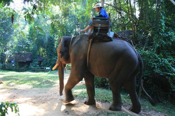 チェンダオの象訓練センターの散歩中の象
