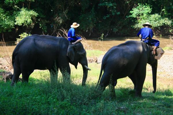 チェンマイの穴場的エレファントキャンプ!チェンダオ象訓練センター