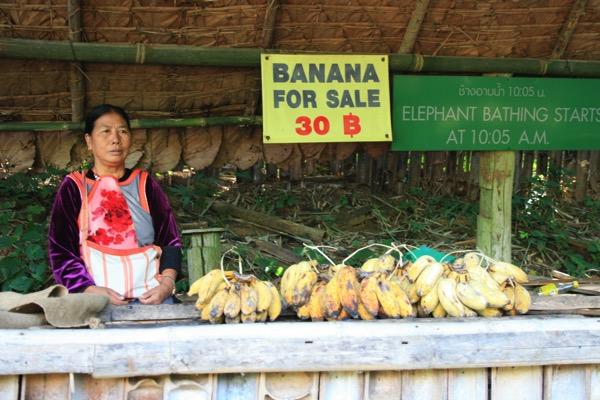 チェンダオの象訓練センターのバナナの売店