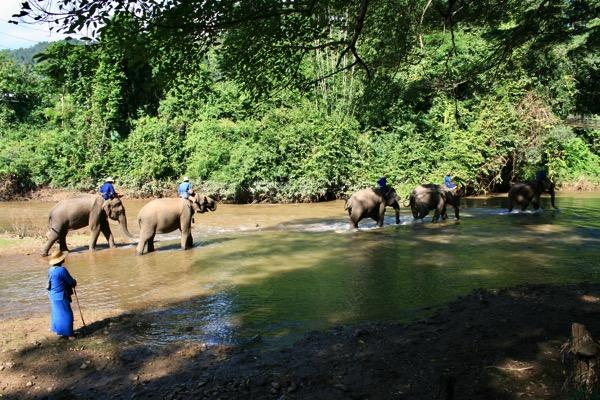 チェンダオの象訓練センターの象の水浴び-1