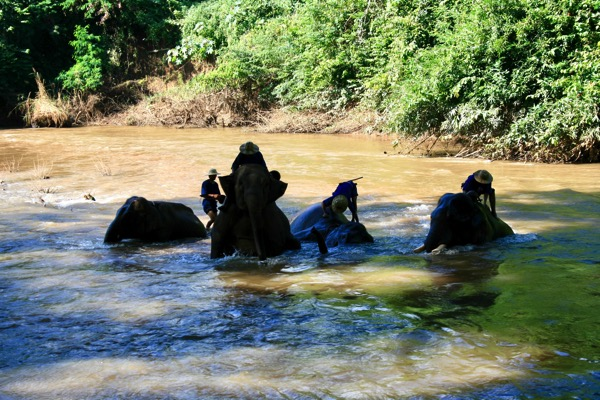 チェンダオ象訓練センターの象の水浴び