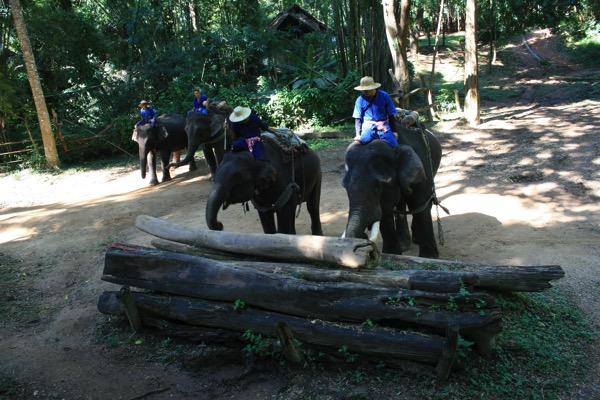 チェンダオ象訓練センターの象ショー