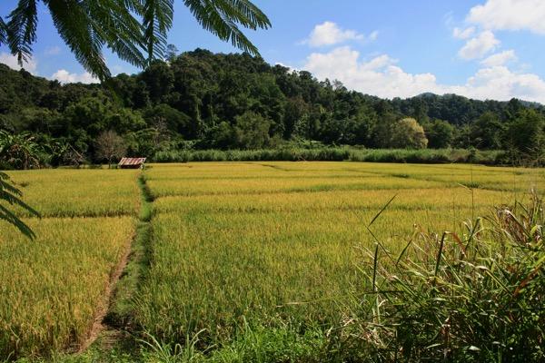 チェンマイからメーガンポン村へレンタルバイクで行った時の風景2