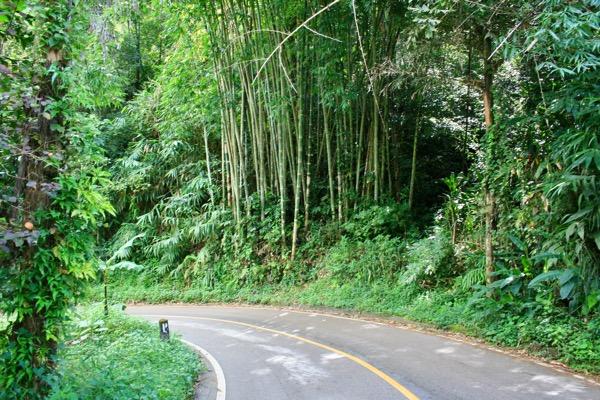 チェンマイからメーガンポン村へレンタルバイクで行った時の風景3