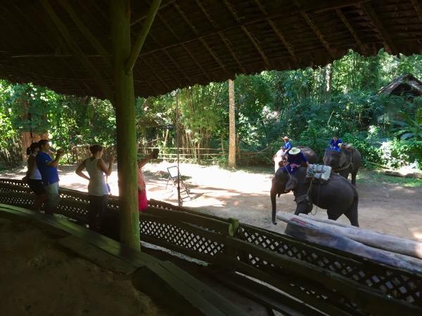 チェンダオの象訓練センターの象ショーの観客