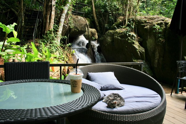 メーガンポン村テドゥカフェの猫