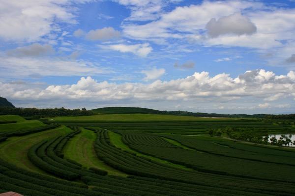 シンハーパークの茶畑