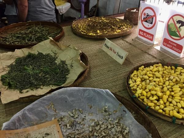 チェンマイのJolie Femme Thai Silkの蚕と繭