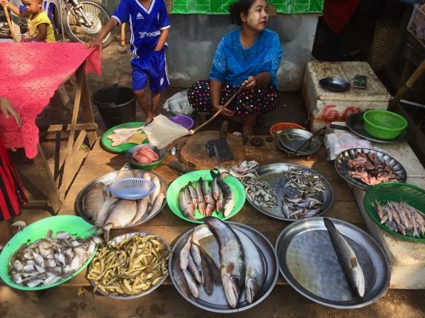 ミャワディのローカル市場-魚