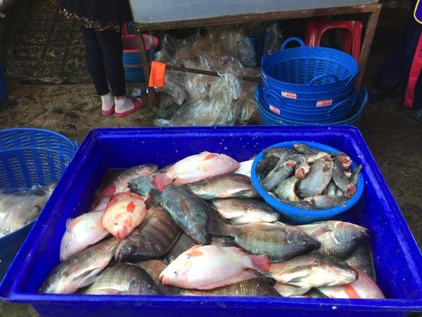 ムアンマイ市場で売っている田蟹のティラピア