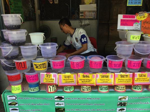 ワットチャイモンコンの生き物売り場