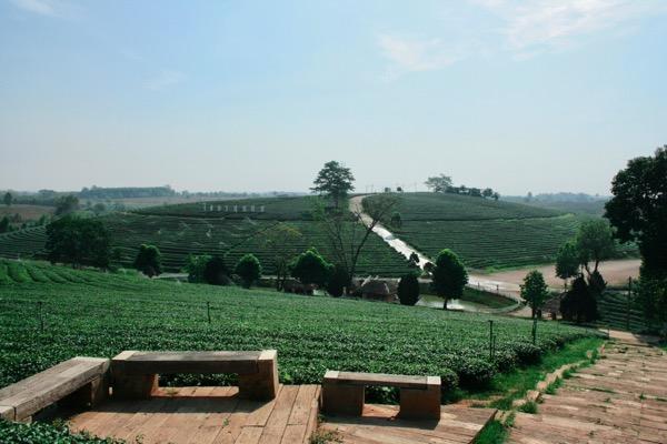 チュイフォン茶畑のテラス席