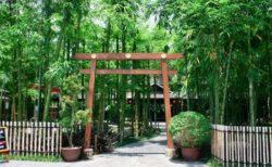 チェンマイの日本風カフェ【ネコエモンカフェ】がまるで日本と話題