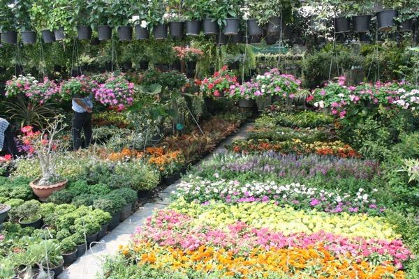 カムティアン植木市場の花