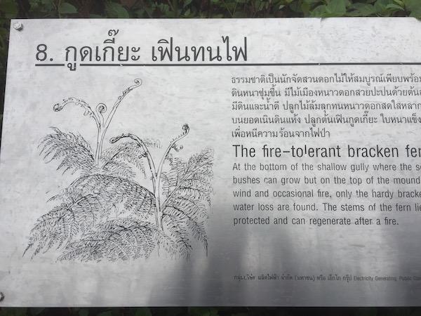 ドイ・インタノン国立公園内の高山植物の説明プレート