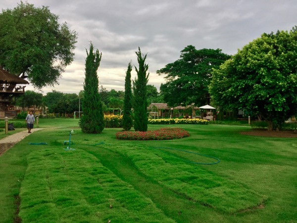 Parinda Gardenの芝生