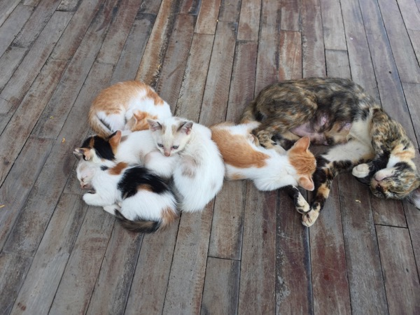 Kaomakham coffee1階のデッキにいる猫
